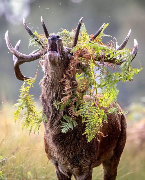07102016-deer