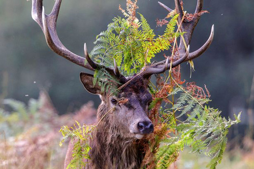 07102016-deer2