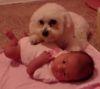 07102016-dogprotectsbaby-s