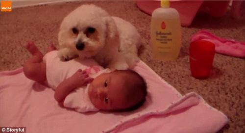 07102016-dogprotectsbaby