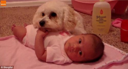 07102016-dogprotectsbaby1