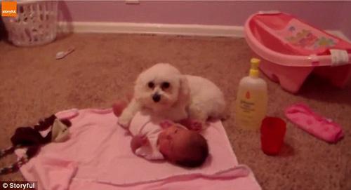 07102016-dogprotectsbaby2