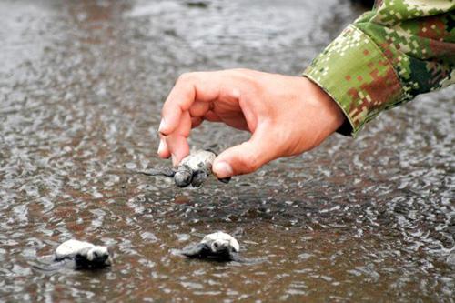 07102016-turtles2