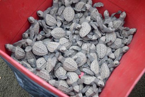 07102016-turtles4