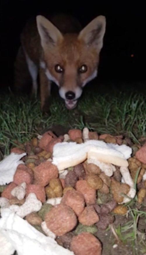 10102016-fox