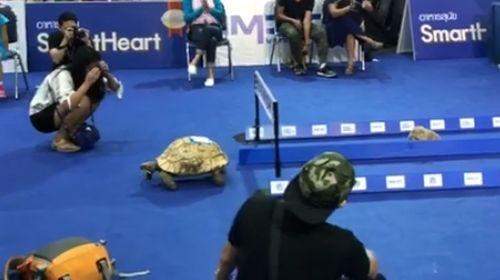 13102016-tortoise1
