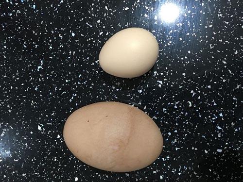 14102016-egg2