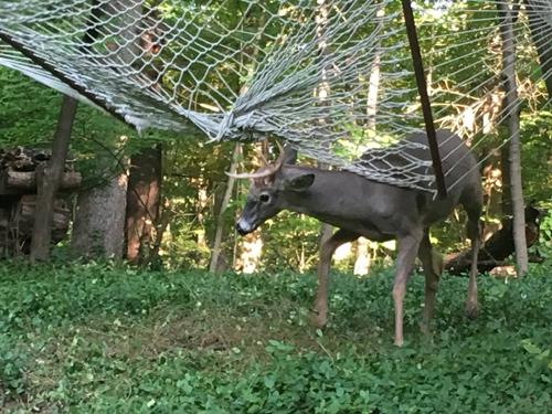 17102016-deer