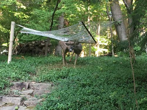 17102016-deer1