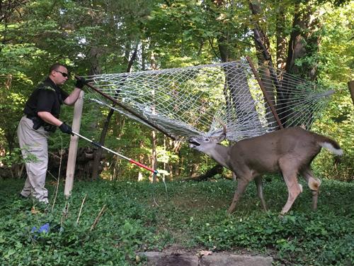 17102016-deer2