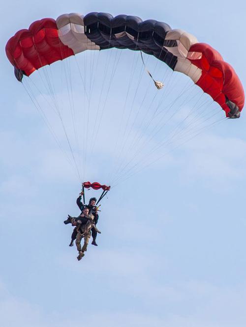 17102016-skydivingdog