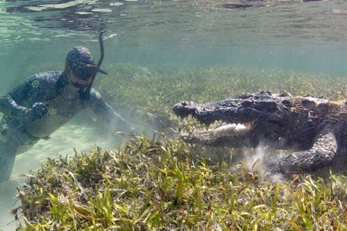 18102016-crocodiles1