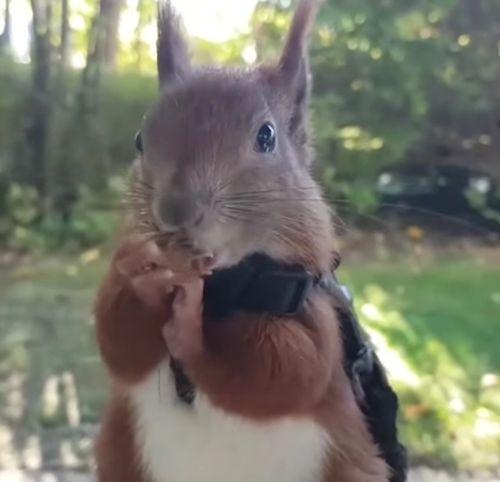 20102016-squirrel2