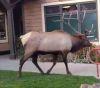 23102016-elks-s