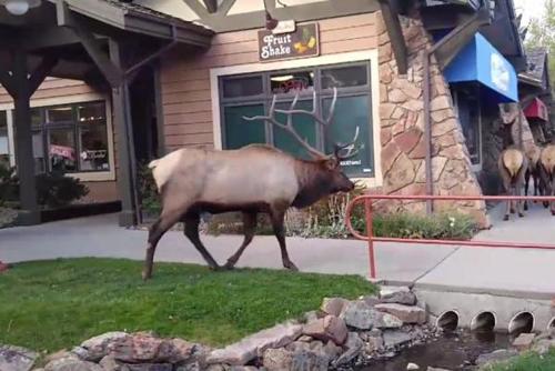 23102016-elks