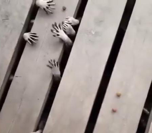 26102016-raccoonhands