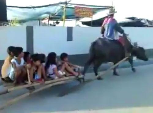 27102016-buffalo1