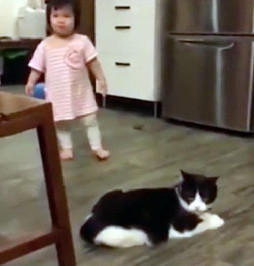 30102016-evilcat