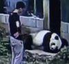 30102016-panda-s