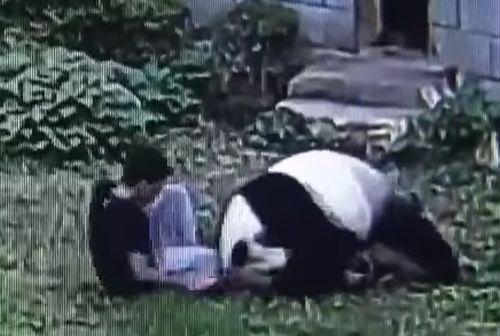 30102016-panda2