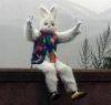 03112016-rabbitman-s