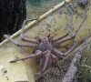 04112016-spider-s