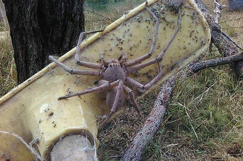 04112016-spider