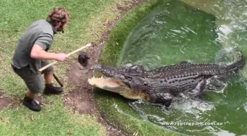 06112016-reptilehandler