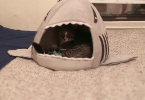 06112016-sharktoy