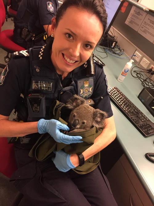 07112016-koala