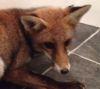 08112016-fox-s