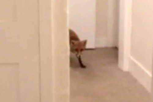 08112016-fox3