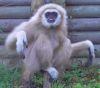 08112016-monkeypanics-s
