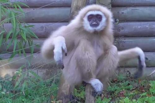 08112016-monkeypanics1