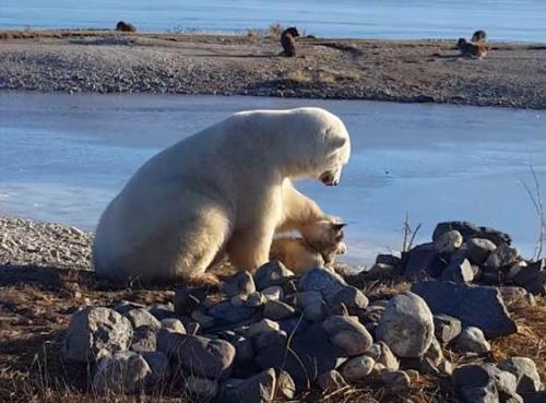 18112016-bearpettingdog