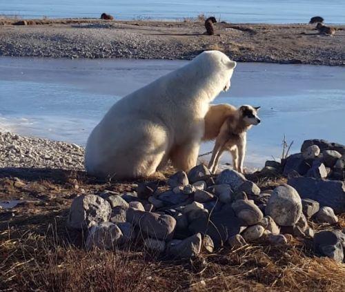 18112016-bearpettingdog1