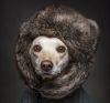 22112016-dogshumans-s