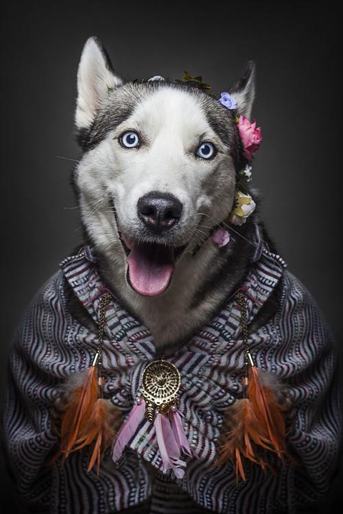 22112016-dogshumans