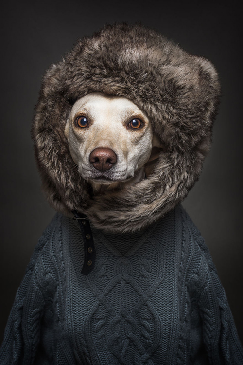 22112016-dogshumans1