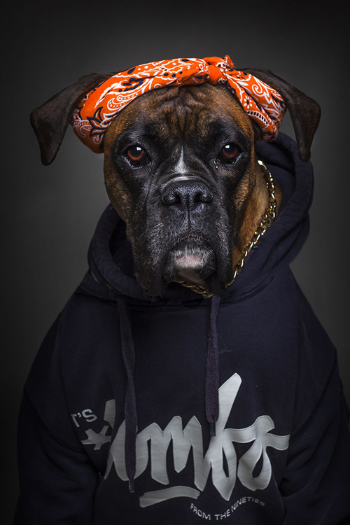 22112016-dogshumans2