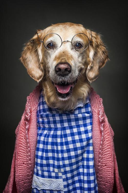 22112016-dogshumans3