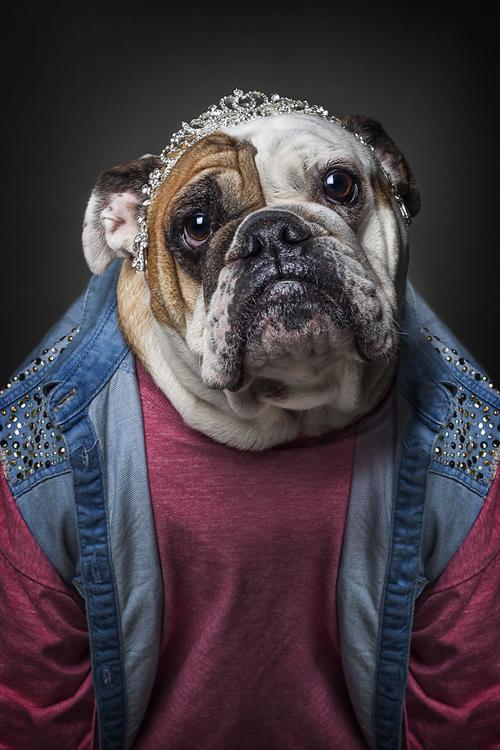 22112016-dogshumans4