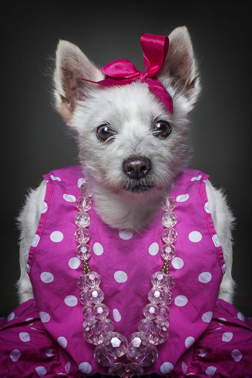 22112016-dogshumans5