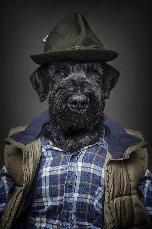 22112016-dogshumans6