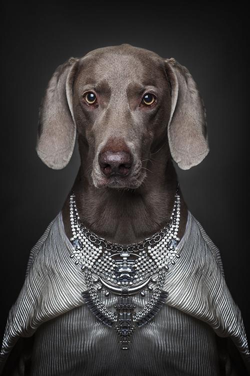 22112016-dogshumans7