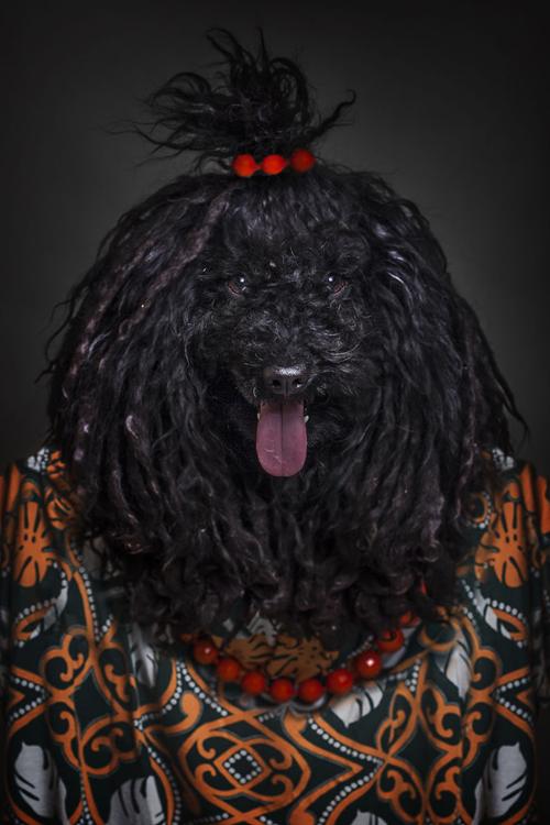 22112016-dogshumans8