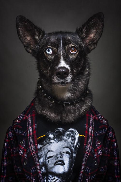 22112016-dogshumans9