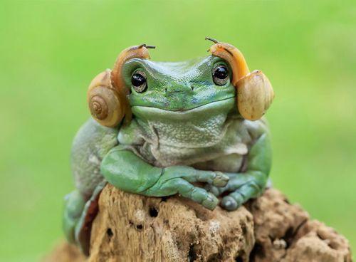 25112016-frog