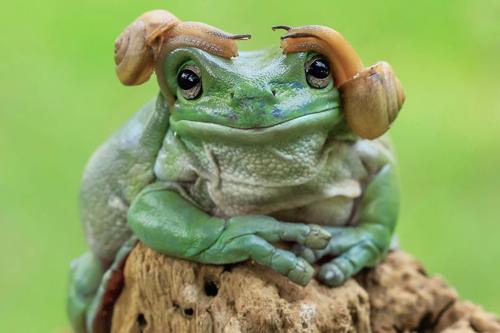 25112016-frog1