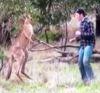 04122016-kangaroo-s
